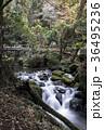 白糸の滝 渓谷 36495236