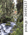 白糸の滝 渓谷 36495237