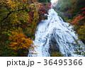 【紅葉見頃】湯滝の紅葉(湯の湖) 36495366