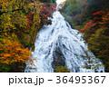 【紅葉見頃】湯滝の紅葉(湯の湖) 36495367