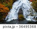 【紅葉見頃】湯滝の紅葉(湯の湖) 36495368