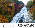【紅葉見頃】湯滝の紅葉(湯の湖) 36495369
