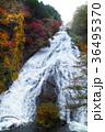 【紅葉見頃】湯滝の紅葉(湯の湖) 36495370