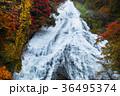 【紅葉見頃】湯滝の紅葉(湯の湖) 36495374