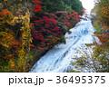 【紅葉見頃】湯滝の紅葉(湯の湖) 36495375