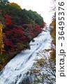【紅葉見頃】湯滝の紅葉(湯の湖) 36495376