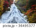 【紅葉見頃】湯滝の紅葉(湯の湖) 36495377