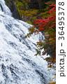 【紅葉見頃】湯滝の紅葉(湯の湖) 36495378