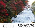 【紅葉見頃】湯滝の紅葉(湯の湖) 36495379