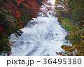 【紅葉見頃】湯滝の紅葉(湯の湖) 36495380