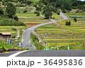 田舎 道 田舎道の写真 36495836