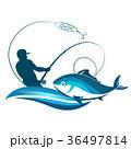 サカナ 魚 魚類のイラスト 36497814