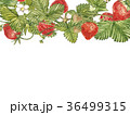 いちご イチゴ 苺のイラスト 36499315