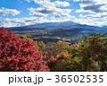 富士山 紅葉 秋の写真 36502535
