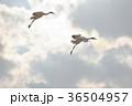 ペア 空 飛ぶの写真 36504957
