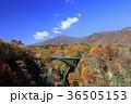 鳴子峡 秋 紅葉の写真 36505153