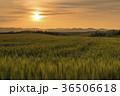 北海道の風景、美瑛の麦畑と夕景 36506618