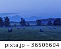 北海道 美瑛 麦畑の写真 36506694