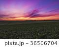 北海道 美瑛 畑の写真 36506704