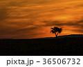 北海道 美瑛 風景の写真 36506732