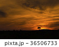 北海道 空 丘の写真 36506733