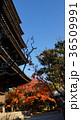 八坂の塔 色づくモミジ 36509991