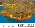 宝仙湖 紅葉 風景の写真 36511588