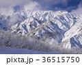 白馬 冬 雪山の写真 36515750