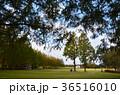 グランドゴルフ場 36516010
