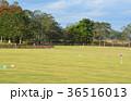 グランドゴルフ場 36516013
