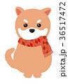 柴犬 マフラー 年賀状素材のイラスト 36517472