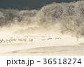 霧 タンチョウ 川霧の写真 36518274