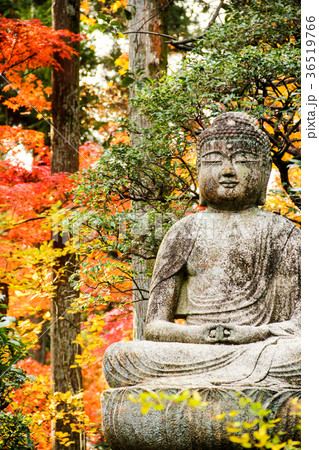 龍安寺、境内の石仏と紅葉 36519766