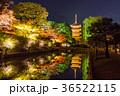京都 紅葉 秋の写真 36522115