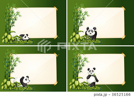 four border templates with panda and bambooのイラスト素材 36525166