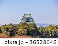 愛知県 秋の名古屋城 36528046