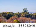 愛知県 秋の名古屋城 36528049