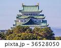 愛知県 秋の名古屋城 36528050