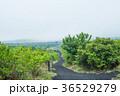 伊豆大島 三原山 自然の写真 36529279