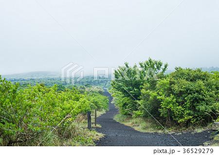 伊豆大島 三原山ハイキング 36529279