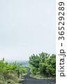 伊豆大島 三原山 自然の写真 36529289