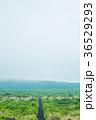伊豆大島 三原山 自然の写真 36529293