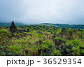 伊豆大島 三原山 自然の写真 36529354