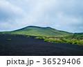 伊豆大島 三原山 自然の写真 36529406