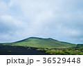 伊豆大島 三原山 自然の写真 36529448