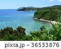 阿嘉島 海 山の写真 36533876