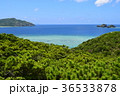 阿嘉島 島 海の写真 36533878