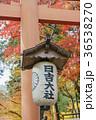 日吉大社 秋 あきの写真 36538270