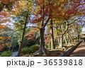 秋 あき 秋のの写真 36539818