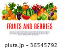 くだもの フルーツ 実のイラスト 36545792